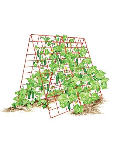 Gardener's Supply Company Deluxe Cucumber Trellis
