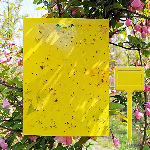 50 Sheets Yellow Sticky Traps, Fruit Fly Traps, for Indoor and Outdoor,...