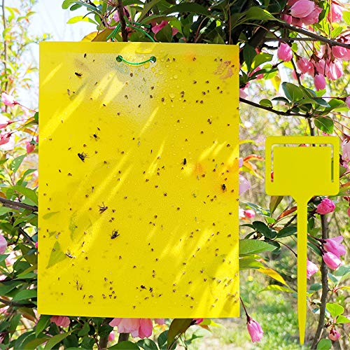 50 Sheets Yellow Sticky Traps, Dual-Sided, 8x6 Inch, with Twist Ties and...