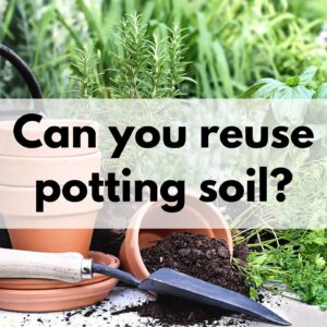 "a picture of two clay pots on a table. One is tipped over with potting soil inside. There is a small garden trowel next to them. There is a text overlay ""Can you reuse potting soil?"""