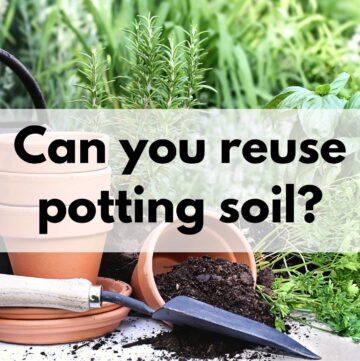 """a picture of two clay pots on a table. One is tipped over with potting soil inside. There is a small garden trowel next to them. There is a text overlay """"Can you reuse potting soil?"""""""