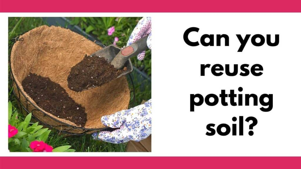 "There are pink bars on top and bottom of the image. On the right tis  square picture of a woman's hands using a trowel to place potting soil in a basket. On the left is the text ""Can you reuse potting soil?"""