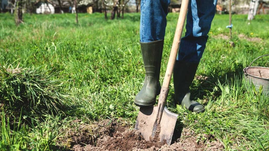 A person's legs wearing green rain boots digging a hole in a yard. They are standing on a shovel and there is a patch of grass removed from the yard where they are digging.