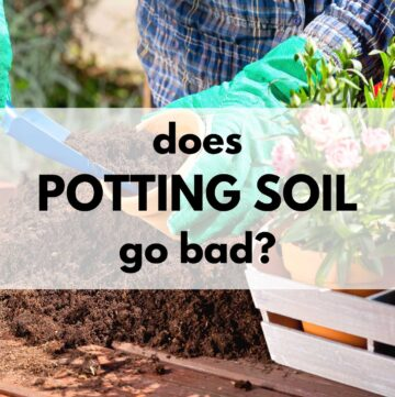 """text overlay """"does potting soil go bad?"""" On a transparent white box. In the background is a picture of a person wearing green gardening gloves placing potting soil in a pot with a spade"""