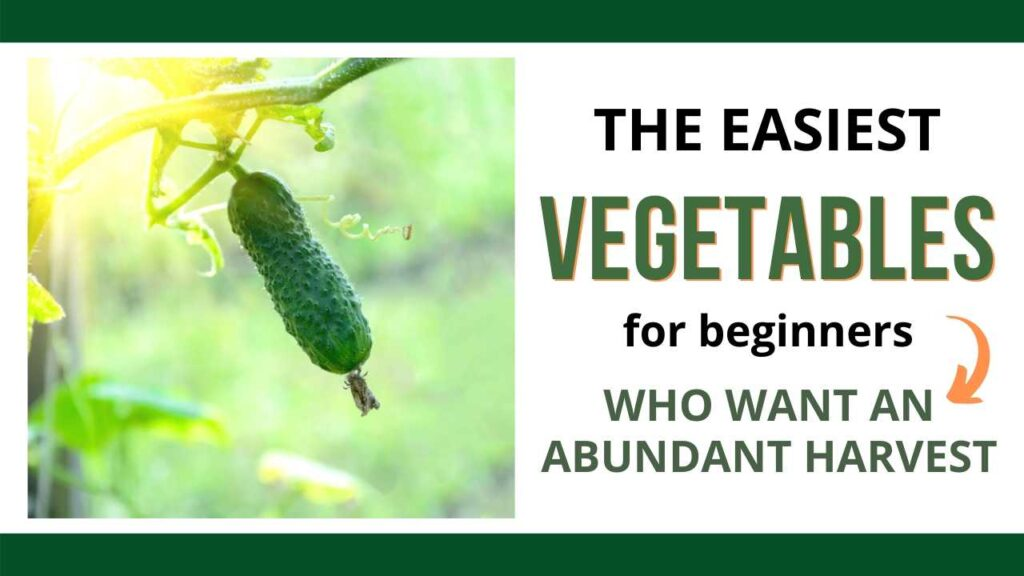 "a picture of a cucumber growing on a  vine on the left with the text ""The easiest vegetables for beginners who want an abundant harvest"" on the right"