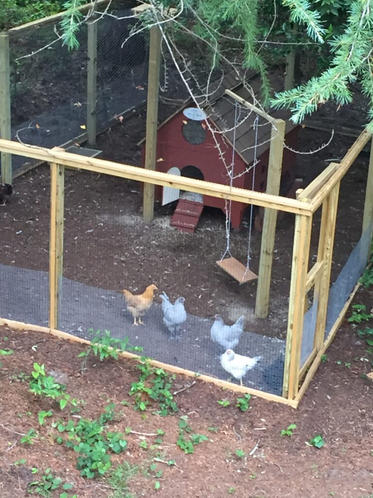 A picture of five hens in a chicken run with a red chicken coop and a swing. The photo was taken from a second floor porch and is looking down into the chicken enclosure. There are two lavender orpingtons, one buff orpington, and a delaware