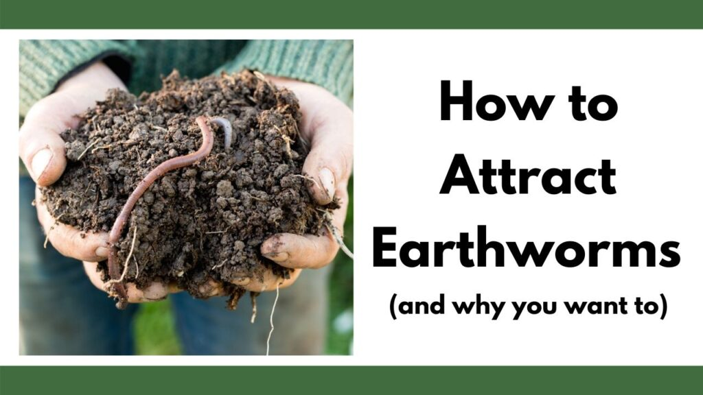 """On the left  are a woman's hands with a handful of earth and an earthworm. On the right is the text """"how to attract earthworms (and why you want to)"""""""