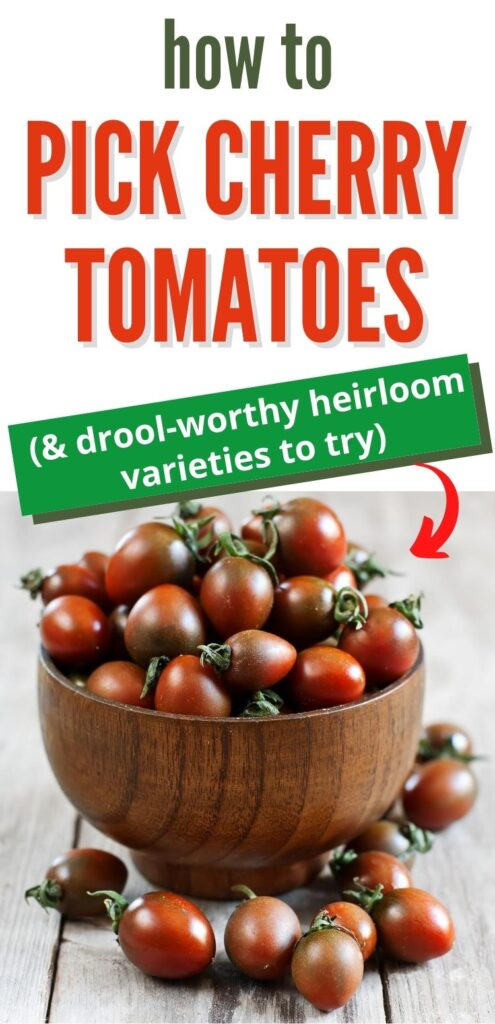 "text ""how to pick cherry tomatoes & drool worthy heirloom tomato varieties to try"" with a picture of black and red cherry tomatoes in a bowl"