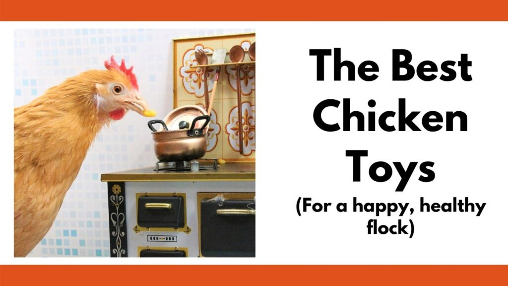 """On the left is a picture of a chicken placing a kernel of corn in a tiny copper pot on top of a miniature wood stove. On the left is the text """"the best chicken toys for a happy healthy flock"""""""