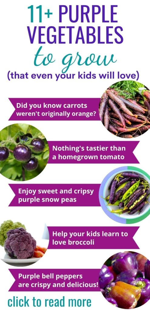 "Test ""11+ purple vegetables to grow (that even your kids will love) with an infographic style post with circles and banners showing carrots, tomatoes, peas, broccoli, and bell peppers. Text on the banners reads ""Did you know carrots weren't originally orange? Nothing's tastier than a homegrown tomato. Enjoy sweet and crispy purple snow peas. Help your kids learn to love broccoli. Purple bell peppers are crispy and delicious!"""