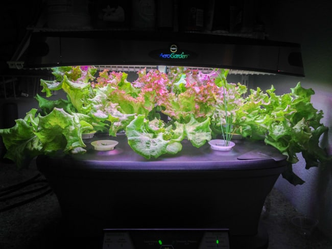 "lettuces and chives growing in an AeroGarden. Because of the bright LED lights, everything else is virtually black. Only the light, plants, and illuminated ""AeroGarden"" logo are truly visible."