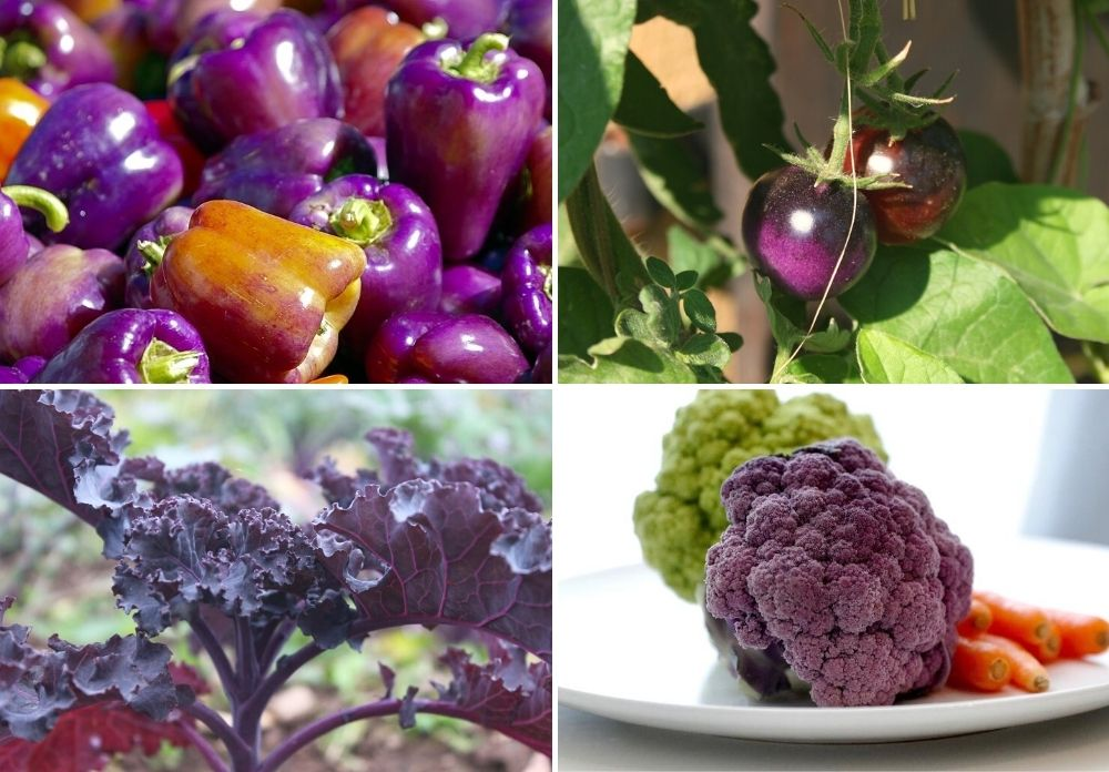 a grid with four images featuring purple vegetables. There is a pile of purple bell peppers, two purple cherry tomatoes growing, purple kale growing, and a plate with green and purple broccoli.