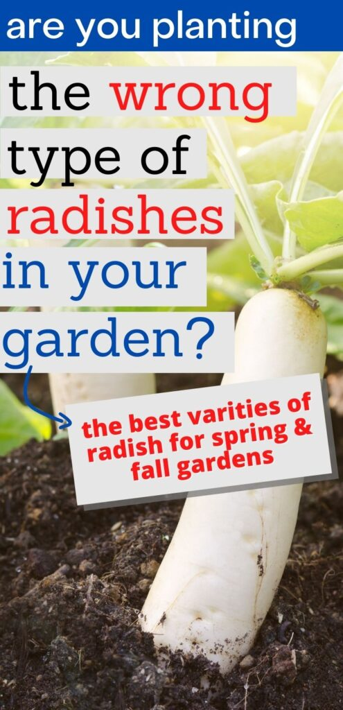 "text ""are you planting the wrong types of radishes in your garden? The best varieties or radish for spring and fall gardens"" In the background is a close up image of two white daikon radishes growing"