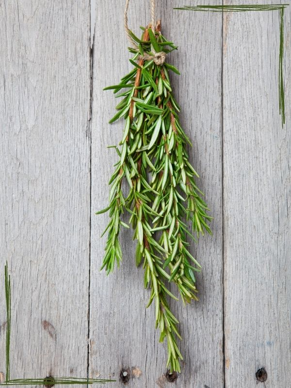 a sprig of rosemary hanging with twine in front of a light colored board wall