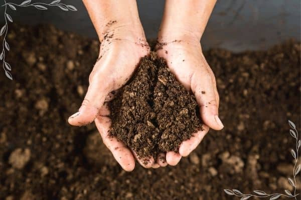 Cupped hands holding a handful of finished, rich compost above a pile of finished compost