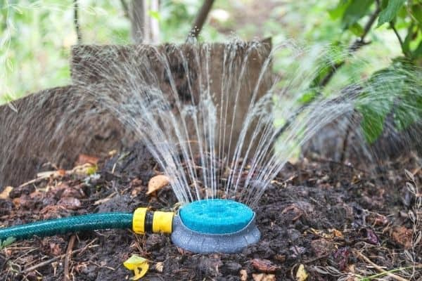 A sprinkler head on a pile of compost watering the compost pile