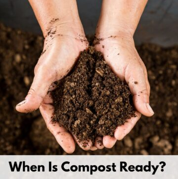 """text overlay """"when is compost ready?"""" on top of an image of cupped hands holding rich, dark, mature compost"""