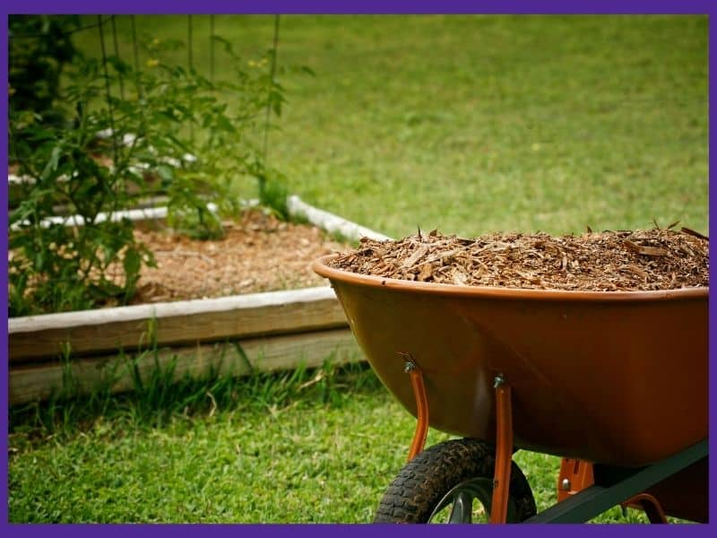 A wheelbarrow filled with wood mulch in front of a freshly mulched garden bed.