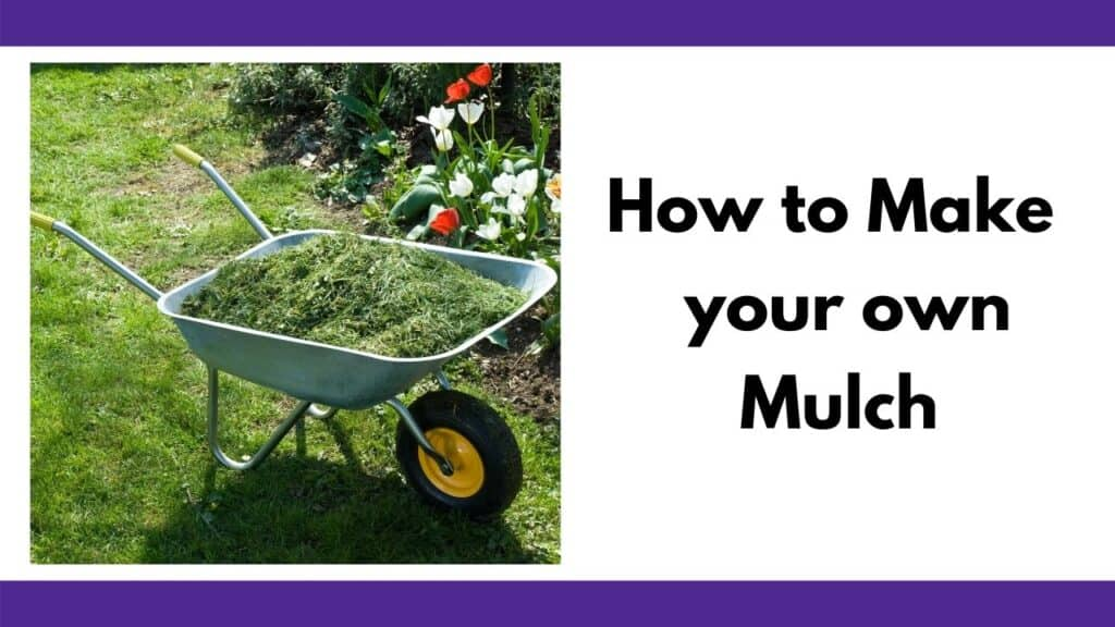 """text """"how to make your own mulch"""" next to a wheelbarrow full of grass clippings on a lawn"""