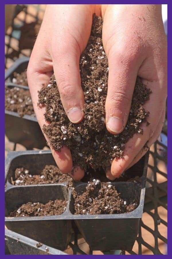 A person's hands adding potting soil to a plastic seed starting tray. The tray is on a metal table outdoors.