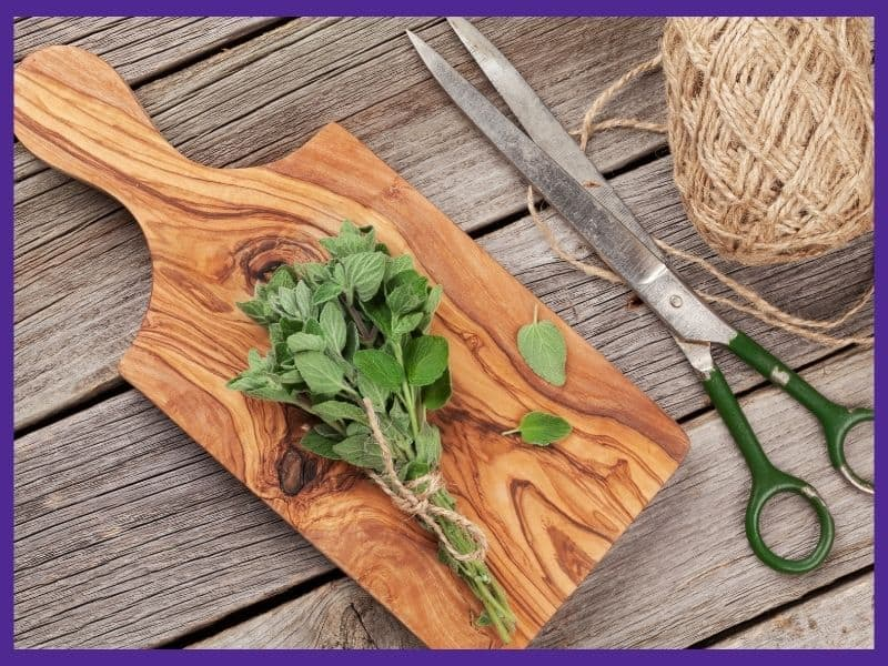 A bunch of freshly harvested oregano tied together with twine. It is on top of a wood cutting board next to a pair of vintage scissors.