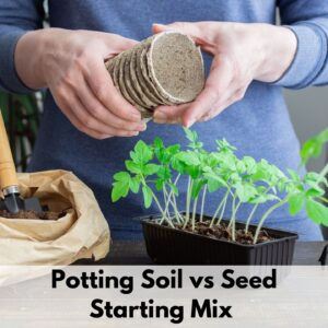 "text overlay ""potting soil vs seed starting mix"" over an image of a person's hands holding peat seedling pots. A seed flat of tomato seedlings ready to transplant is on the table in front of the person. Only their hands and torso are visible."