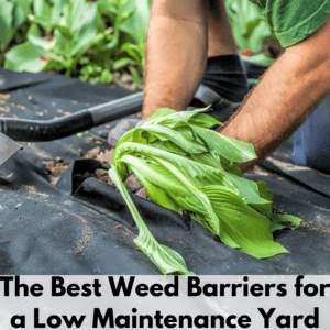 """Text reads """"The best weed barriers for a low maintenance yard"""" on a white transparent background bar. Above is a photo of a person harvesting a leafy green plant which was growing out of an opening in the weed barrier. In the background are other leafy green plants growing out of their holes in the weed barrier."""
