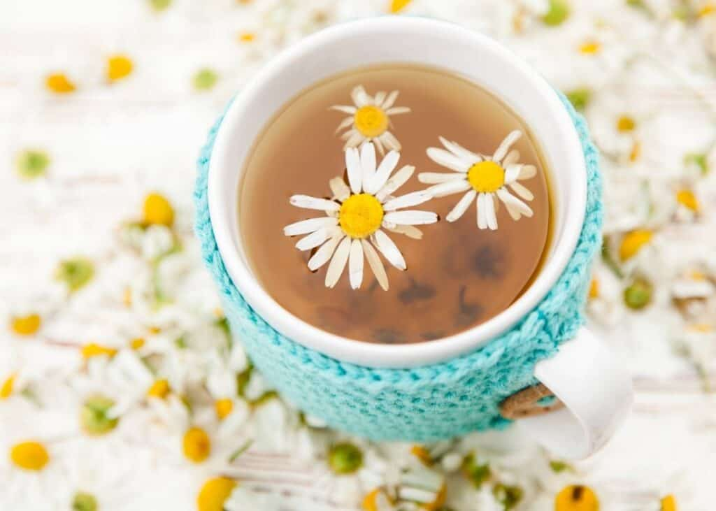 A top down view of a cup of chamomile tea. The tea is in a white mug with a teal knitted mug cozy.