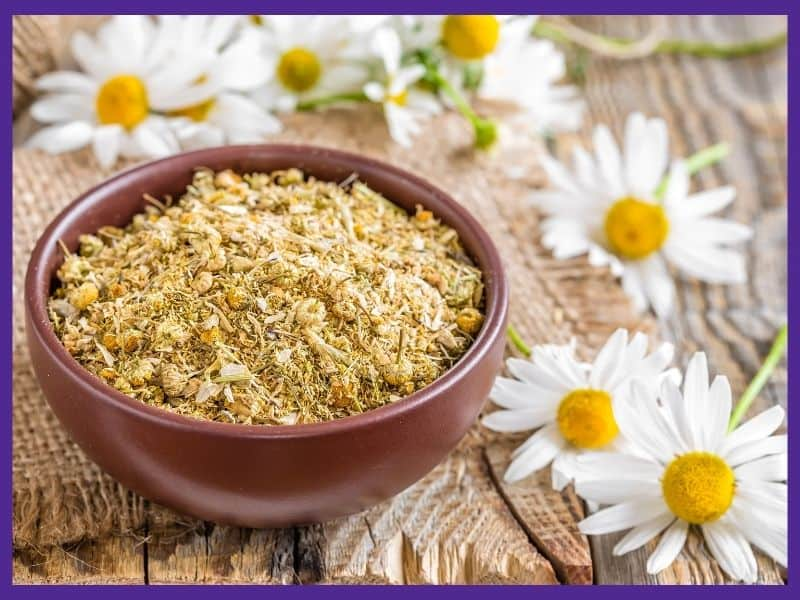 A small bowl of dry chamomile flowers on a wood surface next to fresh chamomile flowers