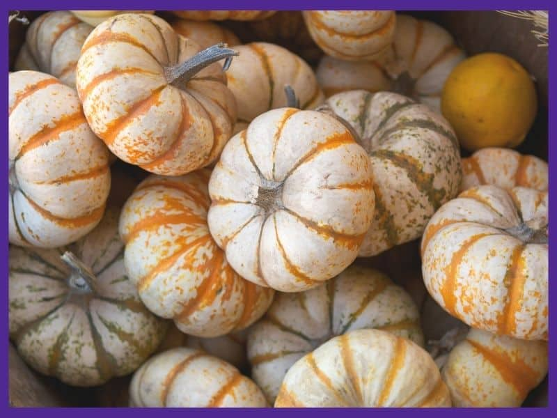 A pile of small white and orange pumpkins in a basket