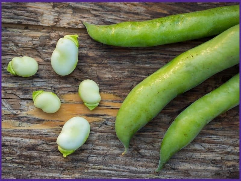 Three fava bean pods and five shelled beans