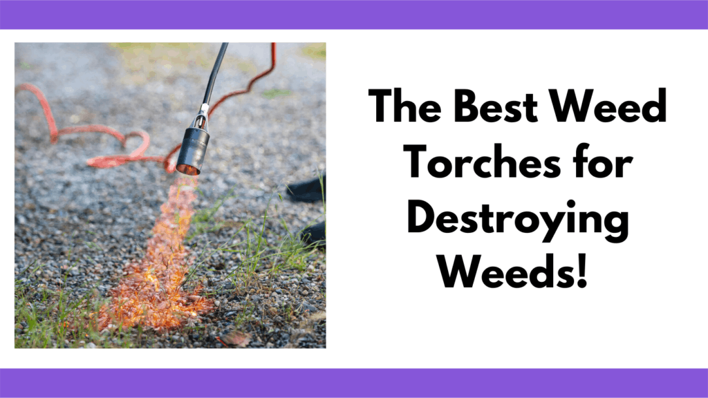"""Text reads, """"The best weed torches for destroying weeds"""" To the left of the text is a person holding a weed burner with a flame coming out of the shroud. The flame is burning some small grasses growing up from a gravel driveway."""