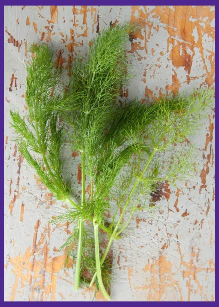 Three young fennel branches harvested and sitting on a weathered wood background.